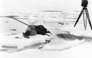 789px-Tournage_de_Nanook_of_the_North_1922